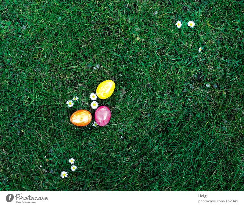 three colourful Easter eggs lie on flowering daisies in a meadow Colour photo Multicoloured Exterior shot Deserted Copy Space right Copy Space top