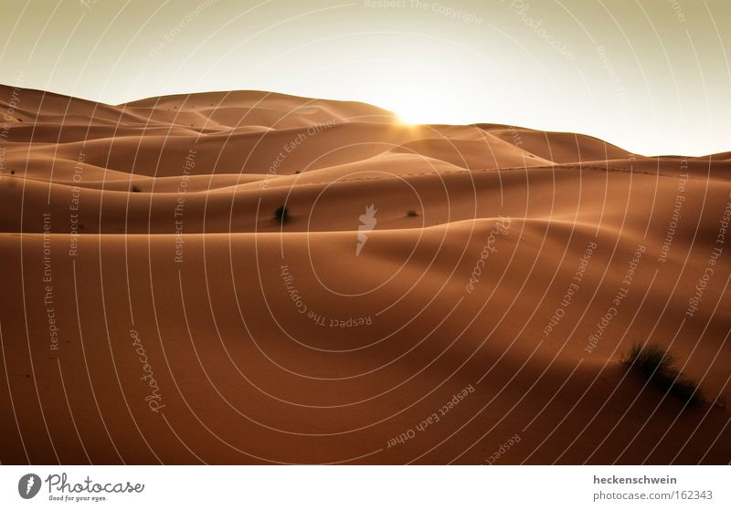 Sun Grass Warmth Sand Horizon Earth Empty Africa Desert Transience Hot Sunset Dry Dune Climate change Badlands