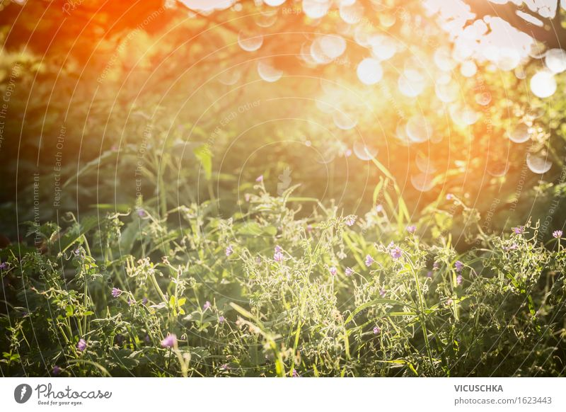 Summer nature with grass, wildflowers and sunset Lifestyle Design Garden Environment Nature Landscape Plant Sunrise Sunset Sunlight Spring Autumn