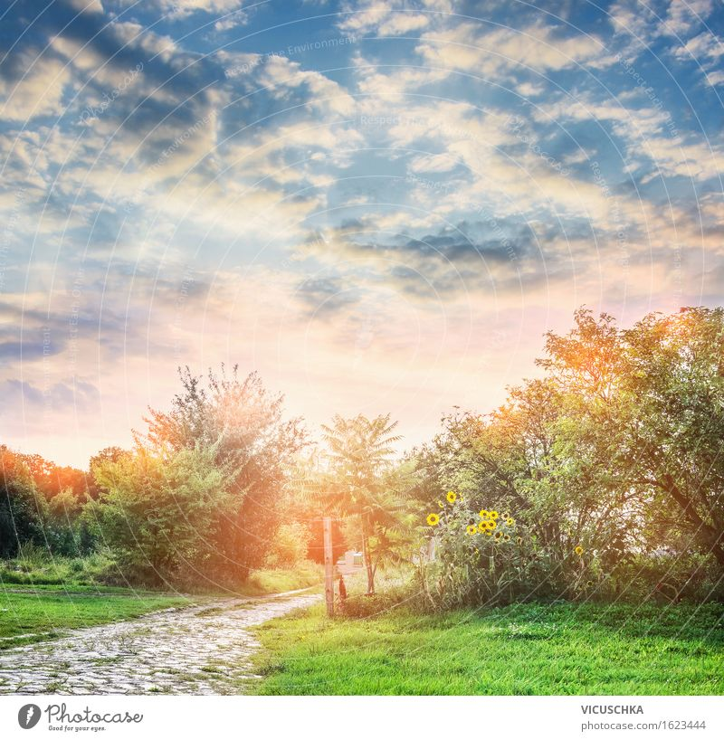 Sky Nature Vacation & Travel Plant Summer Tree Flower Landscape Environment Yellow Autumn Lanes & trails Grass Style Lifestyle Garden