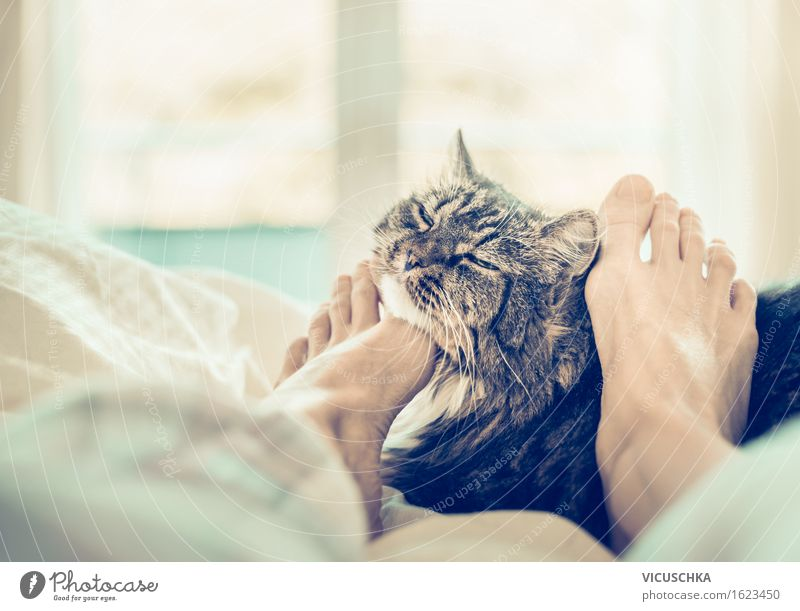 With cat in bed scmusen Lifestyle Style Living or residing Bed Bedroom Human being Woman Adults Feet Pet Cat 1 Animal Retro Relaxation Cuddling Window Joy