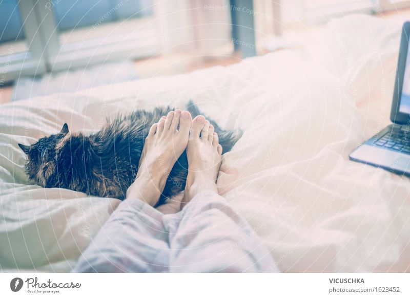 With a cat in bed. Home Lifestyle Style Summer Living or residing Flat (apartment) Bed Bedroom Notebook Human being Woman Adults Feet 1 To enjoy Crouch Lie