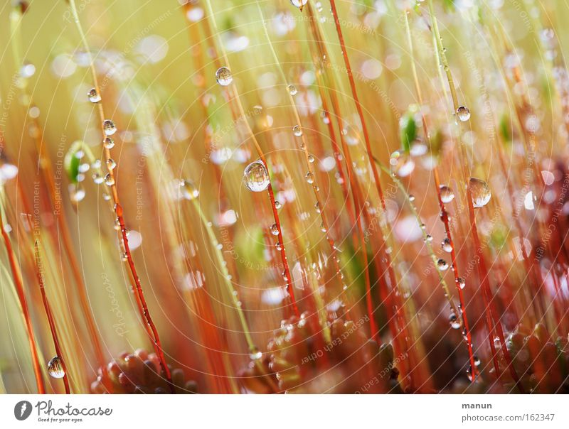twinkling moss Colour photo Subdued colour Exterior shot Close-up Detail Macro (Extreme close-up) Abstract Pattern Structures and shapes Deserted