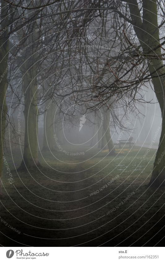 Nature Tree Forest Spring Lanes & trails Landscape Moody Fog To go for a walk Soft Footpath Mystic Avenue Branchage