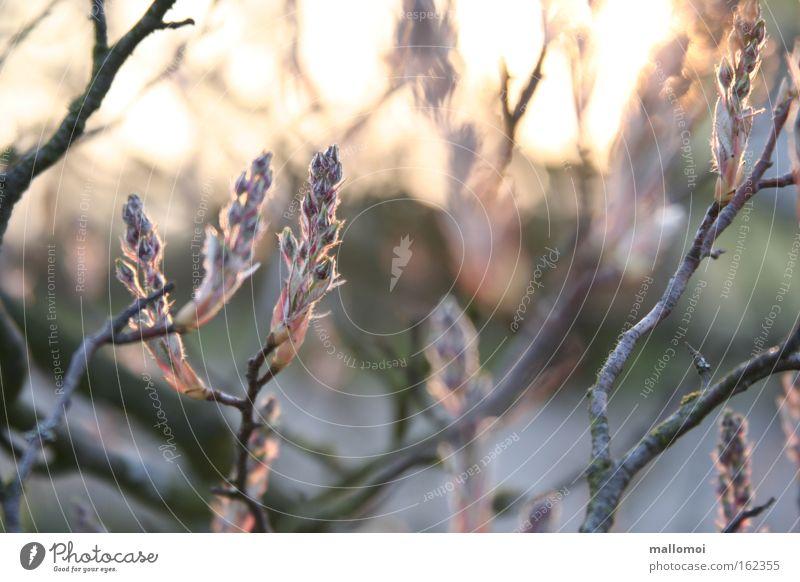 Nature Plant Calm Life Blossom Spring Dream Landscape Pink Environment Beginning Growth Branch Delicate Joie de vivre (Vitality) Serene
