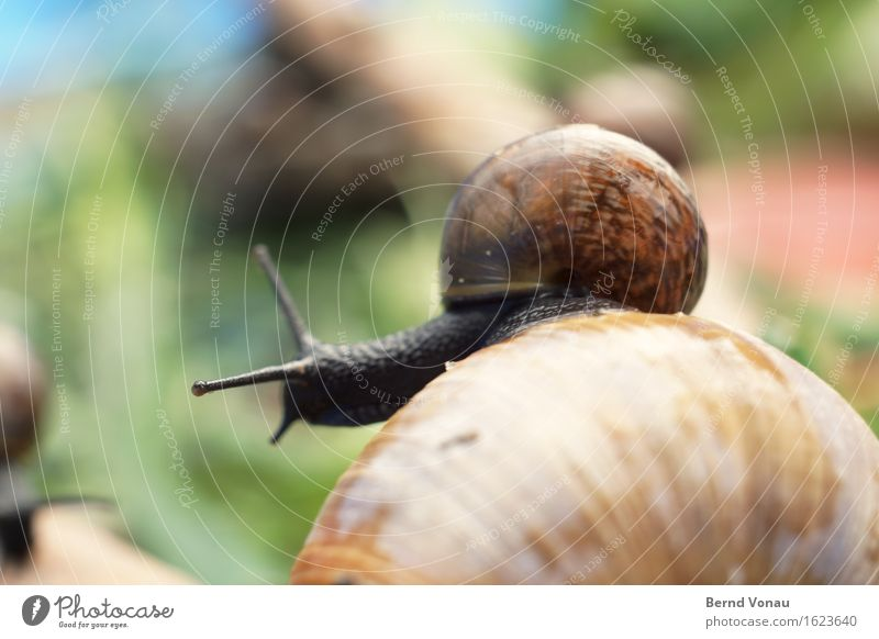 pet Animal Snail Group of animals Baby animal Small Wet Cute Blue Brown Green Pet Snail shell Fresh Back Ride Carrying Parent with child Colour photo