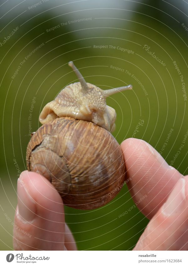 Snail looks out as someone holds up her house against a blurred green background outside Relaxation Calm Environment Nature Animal Crumpet Touch natural