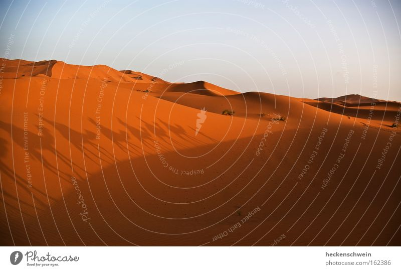 Loneliness Sand Search Horizon Earth Empty Target Africa Desert Hot Dry Dune Orientation Camel Sahara Caravan