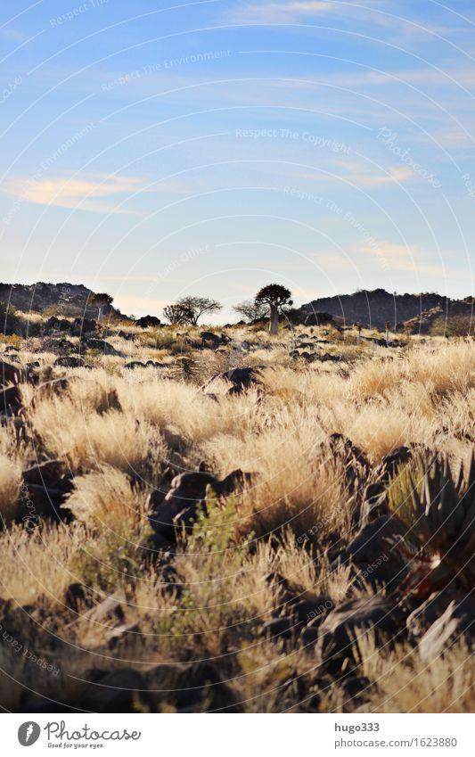 Endless Wilderness Environment Nature Landscape Earth Beautiful weather Warmth Plant Bushes Desert Kalahari desert Blue Brown Yellow Gold Grass Steppe Horizon