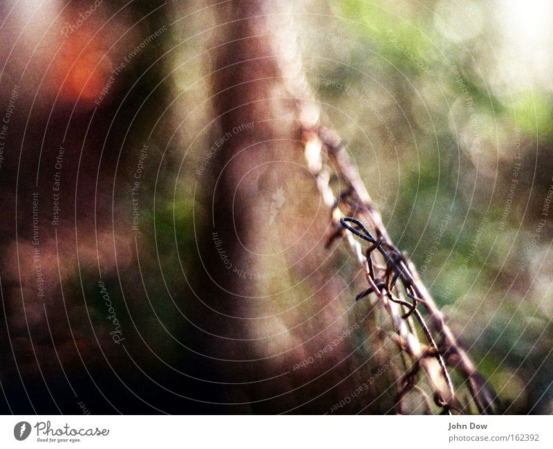 Plant Landscape Metal Footpath Steel Fence Border Rust Divide Wire Thorny Boundary Hazy Fusion Border area Wire netting fence