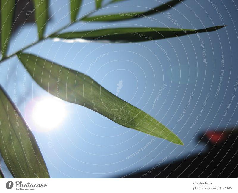 spring awakening Sky Spring Sun Plant Leaf Life Desire Joy Balcony Aspire Growth Wake up New start Blue Green