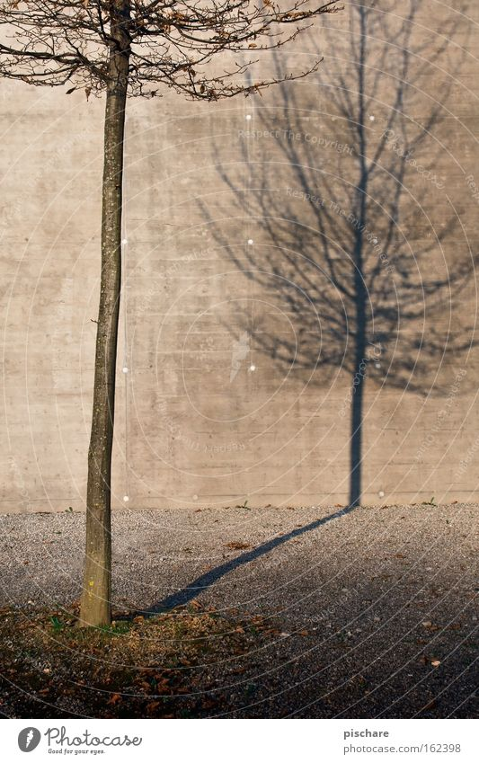 The shadow of itself Nature Autumn Tree Town Concrete Loneliness Transience Wall (building) Tree trunk Bleak pischarean Shadow Silhouette