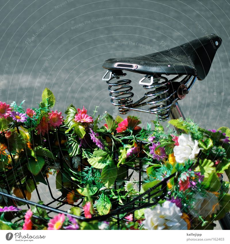 Flower Street Spring Blossom Bicycle Leisure and hobbies Trip Growth Decoration Metal coil Direction Basket Road traffic Bicycle saddle Saddle Father's Day