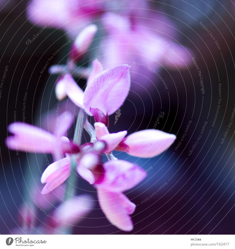 Nature Beautiful Plant Flower Spring Blossom Pink Violet Delicate Trust Craft (trade) Markets Florist