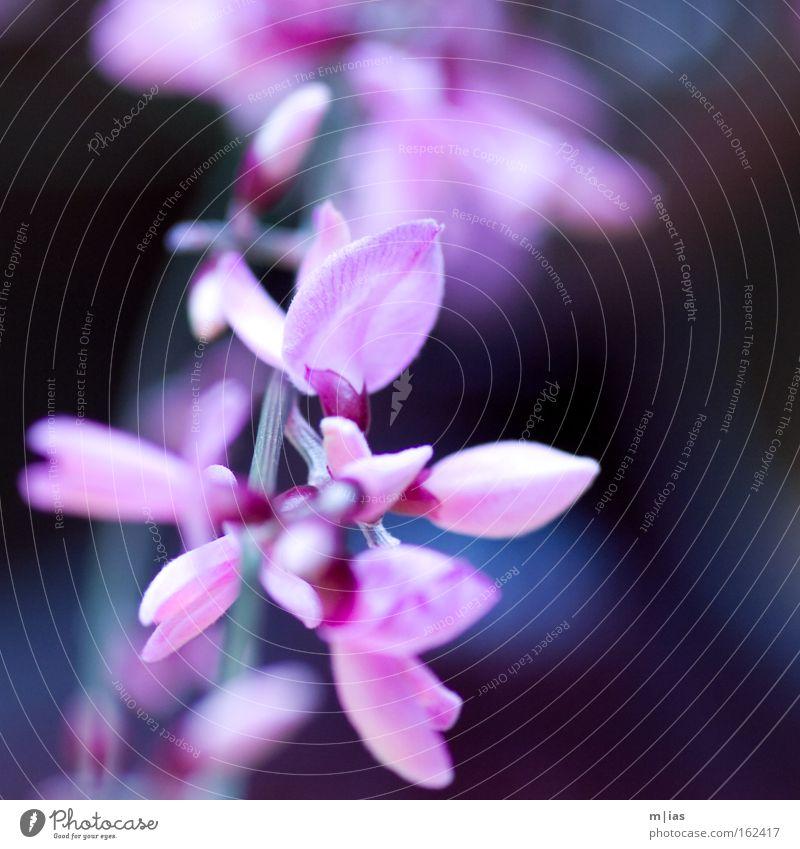 Nature Beautiful Plant Flower Spring Blossom Pink Violet Delicate Trust Craft (trade) Markets Florist