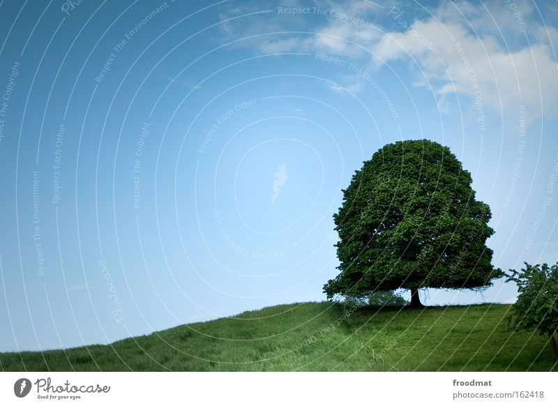 Nature Old Sky Tree Green Summer Calm Meadow Mountain Background picture Large Might Growth Peace Kitsch Switzerland