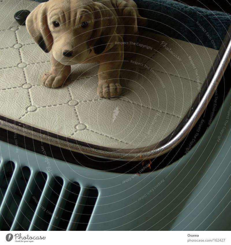 Dog Animal Car Window Retro Mammal Window pane Slice Beetle Motor vehicle Petit bourgeois Dachshund Rack Hat rack Rear Window