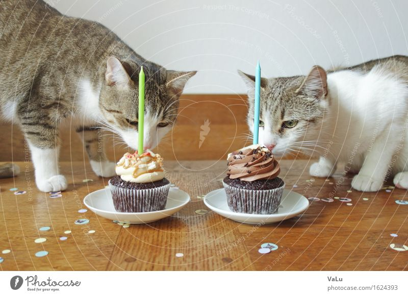 Happy Birthday II Dessert Candy Feasts & Celebrations Pet Cat 2 Animal Eating Kitten Cupcake Candle Odor Confetti Colour photo Day Animal portrait
