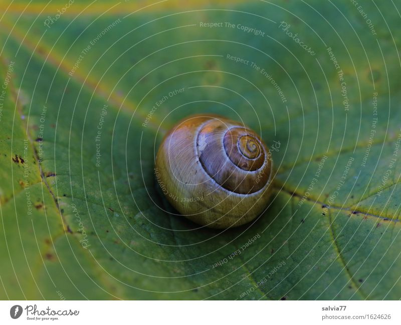 retreat Nature Autumn Plant Leaf Rachis Animal Snail Snail shell Brown Yellow Green Loneliness Break Calm Protection Symmetry Transience Change Time