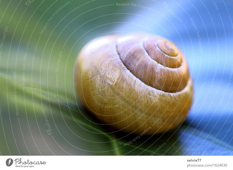 hot and cold Nature Plant Leaf Animal Snail Snail shell 1 Esthetic Round Blue Yellow Green Design Calm Protection Spiral Symmetry Structures and shapes Line