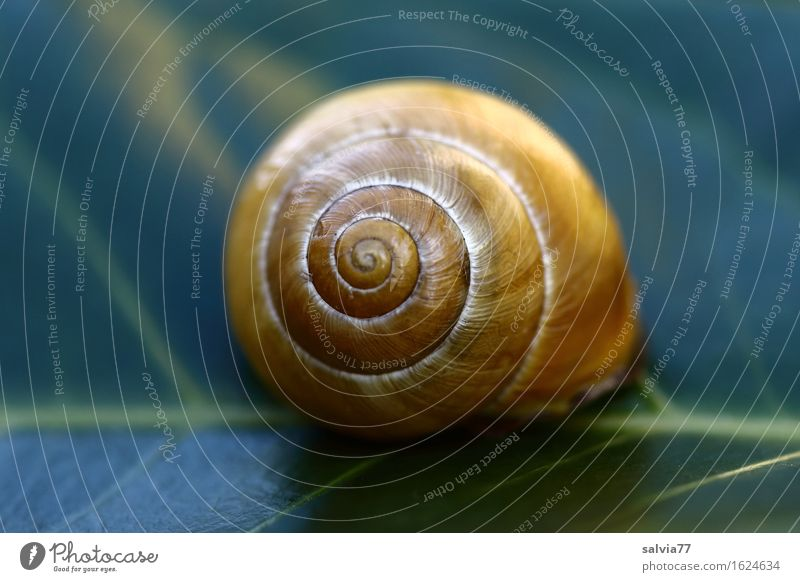 resting place Nature Plant Animal Leaf Foliage plant Garden Wild animal Snail 1 Round Blue Yellow Green Protection Calm Design Colour Structures and shapes