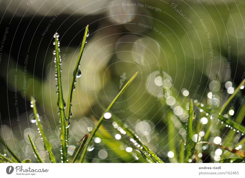Nature Plant Green Water Spring Meadow Lighting Grass Rain Glittering Growth Earth Drops of water Fertile