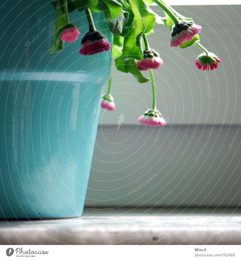 One(s) should water ! Colour photo Interior shot Pot Plant Flower Window Watering can Broken Flowerpot Daisy Limp Shriveled Cast Window board Houseplant Slack