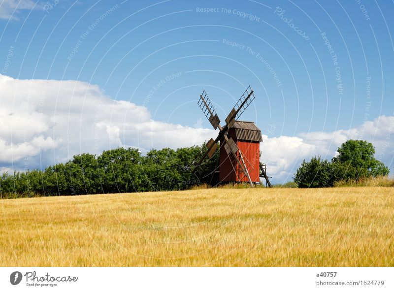 Windmill Sweden Holm Oland Landscape Culture Sun Nature Famous Place Architecture Agriculture Rural Sky Hill Scandinavia Flower Spring Old Old fashioned