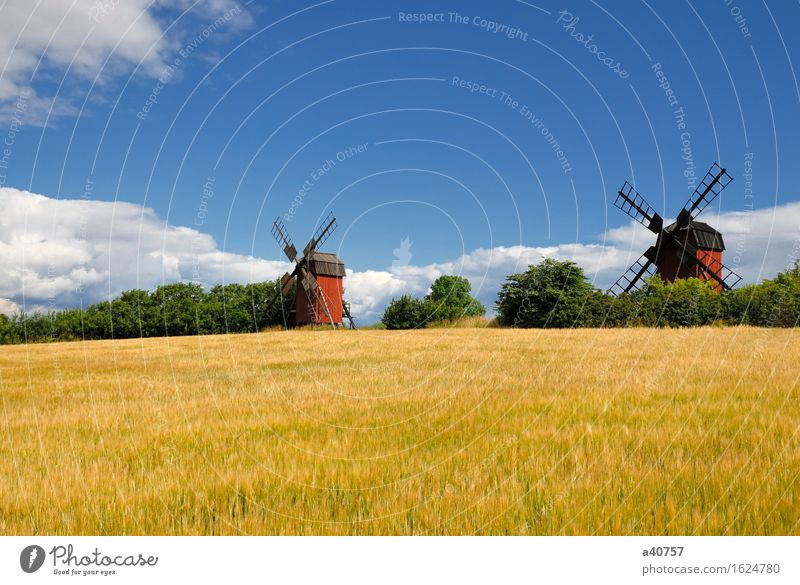 Windmill Oeland Sverige Sweden Holm Oland Landscape Culture Sun Nature Famous Place Architecture Agriculture Rural Sky Hill Scandinavia Flower Spring Old