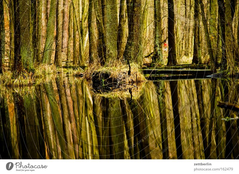 Briesetal Forest Tree Tree trunk Mixed forest Deciduous forest Marsh Lake Pond Water Reflection Nature Environmental protection Hiking To go for a walk Spring