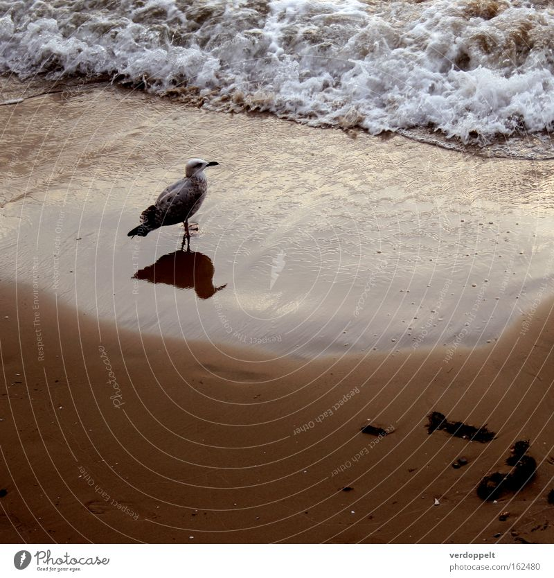 m_3 Nature Water Ocean Animal Bird Waves Weather