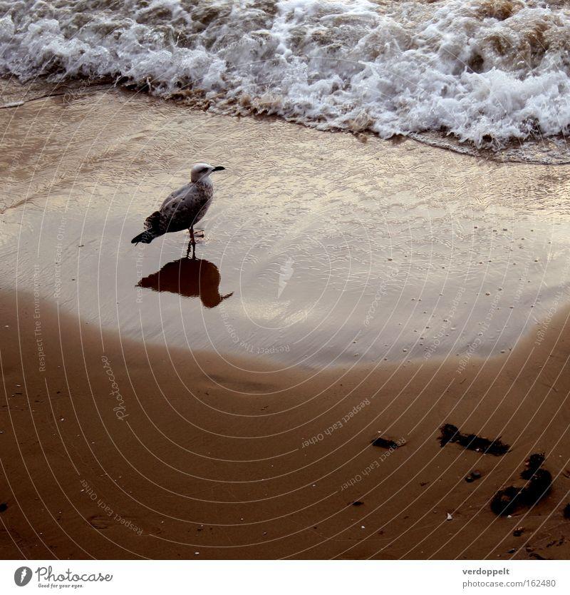 m_3 Ocean Waves Bird Reflection Water Sunset Nature Animal Weather gal seaside
