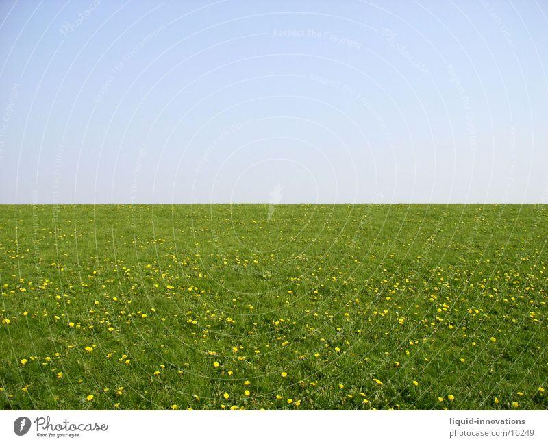 dyke Dike Meadow Green Horizon Flower meadow Sky