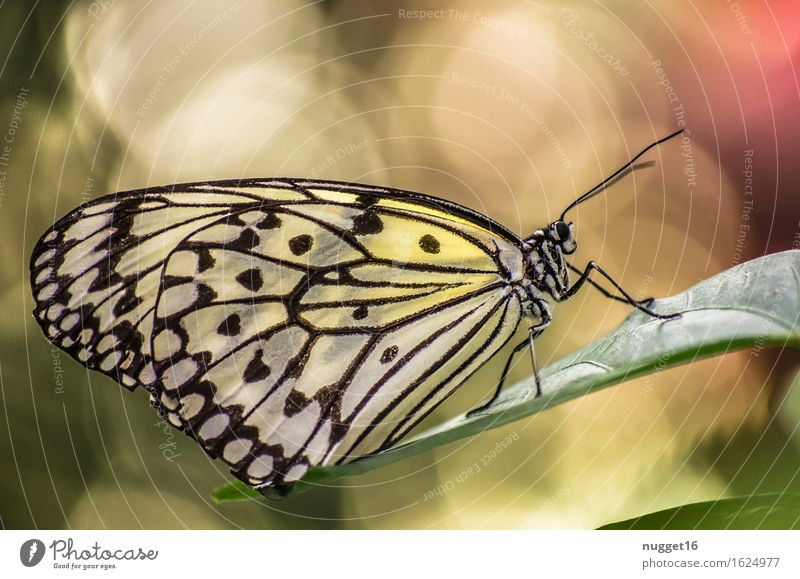 wonders of nature Nature Animal Spring Virgin forest Wild animal Butterfly Wing 1 Glittering Esthetic Exotic Near Beautiful Multicoloured Yellow Green Orange