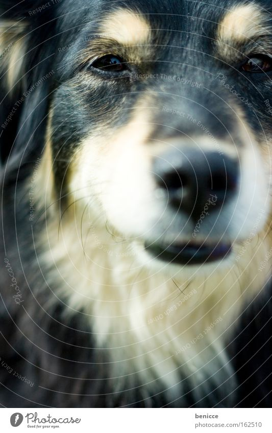 Animal Eyes Dog Hair and hairstyles Pelt Mammal Earnest Intensive Husky