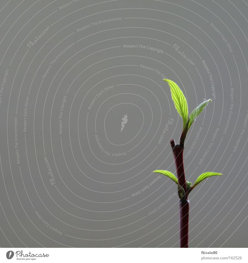 offshoot Colour photo Copy Space left Decoration Spring Leaf Blossoming New Green Branch Twig Leaf green Delicate Wake up Individual Asia Feng Shui Day