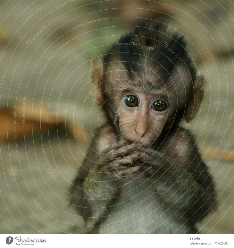 baby monkey Animal Virgin forest Wild animal Animal face Pelt Monkeys 1 Baby animal To feed Looking Exotic Small Cute Brown Loneliness Sadness Young monkey Eyes