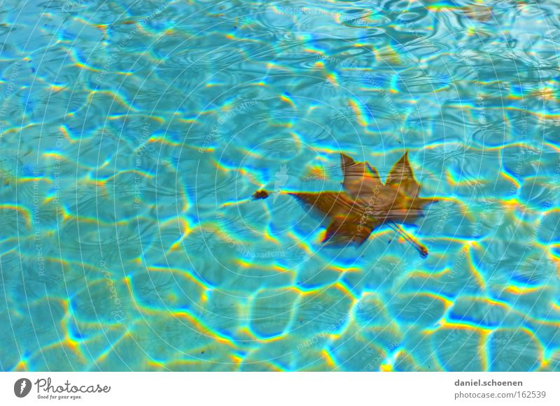 Blue Water Summer Leaf Waves Background picture Swimming pool Float in the water Surface