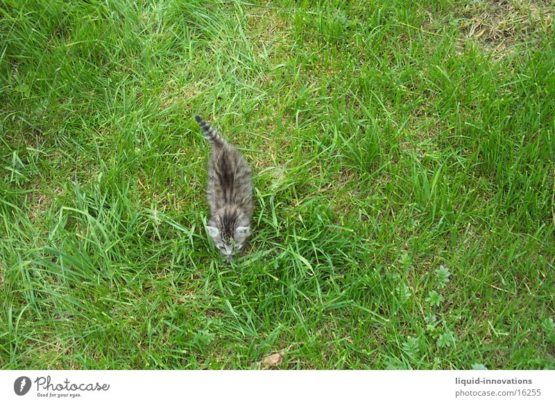Meadow Cat Transport Theft