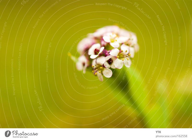 Nature Green Plant Summer Joy Flower Loneliness Leaf Environment Meadow Spring Blossom Garden Park Bushes Violet