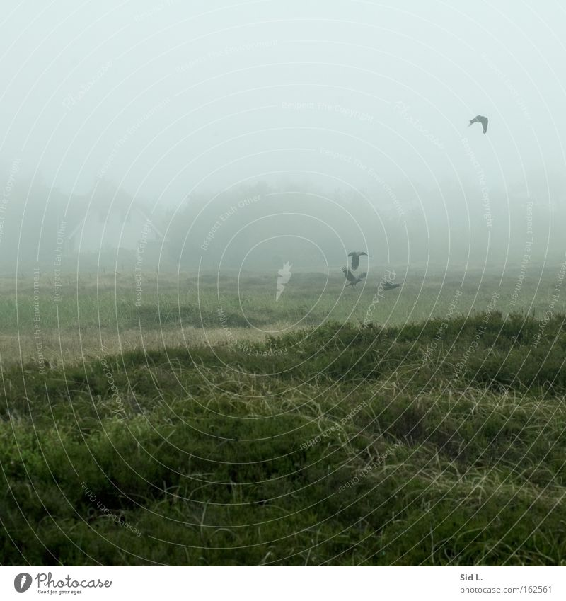House (Residential Structure) Bird Fog Flying Island Peace Wind Calm Crow Flee Heather family