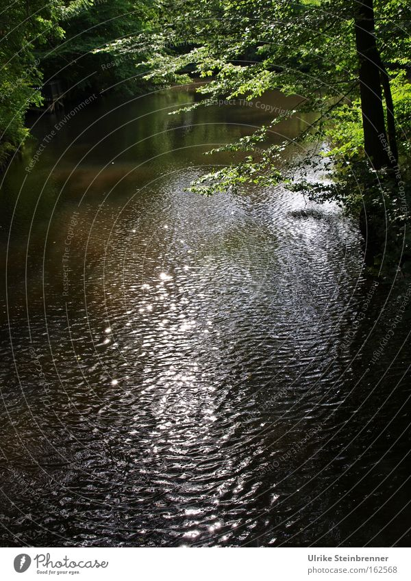stream flows under green branches slightly rippled Colour photo Exterior shot Copy Space bottom Light Shadow Sunbeam Harmonious Relaxation Calm Waves Nature