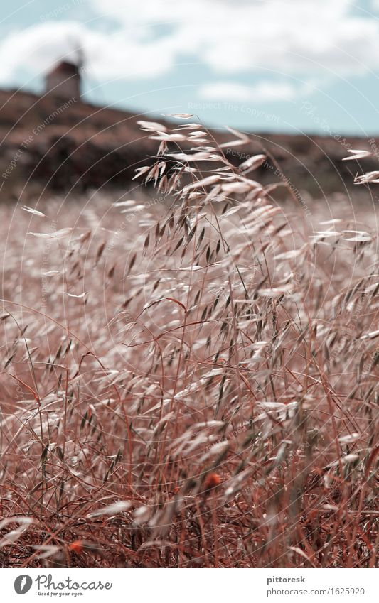 Wind III Art Work of art Esthetic Field Grain Grain field Grain harvest Mill Idyll Summer Summer vacation Blow Calm Spain Colour photo Subdued colour