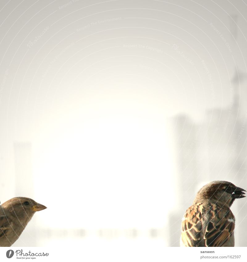Animal Bird Wing To feed Beak Competition Feed Sparrow Behavior Egotistical Songbirds Sunflower seed Food envy