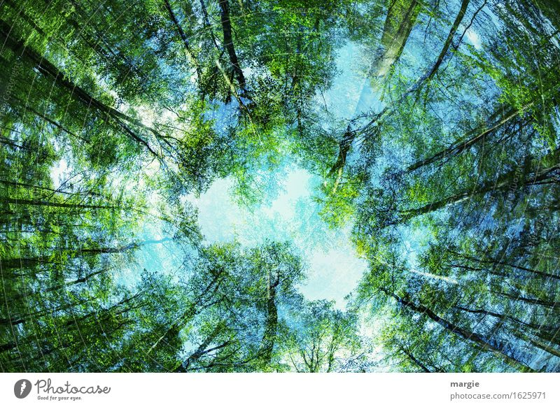 Maiwald: the view into the sky seems confusing Relaxation Calm Meditation Environment Nature Plant Animal Sky Spring Beautiful weather Tree Leaf Foliage plant