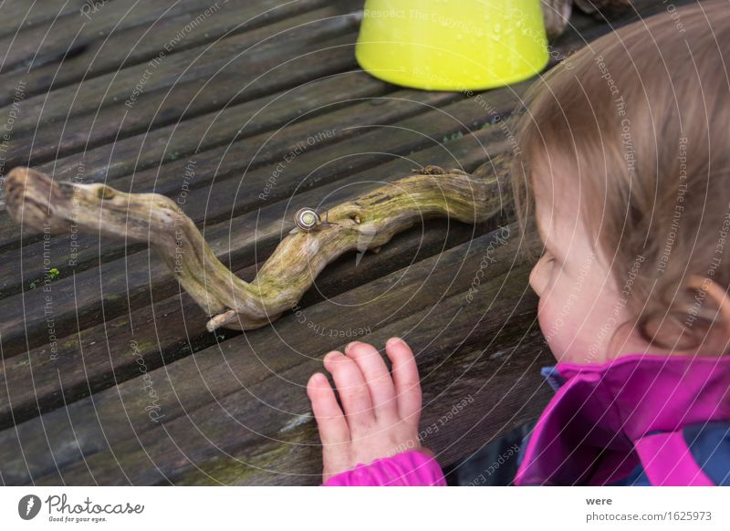 Human being Child Nature Animal Curiosity Events Crawl Single-minded Slimy Snail shell Love of nature Miracle of Nature Forest kindergarten