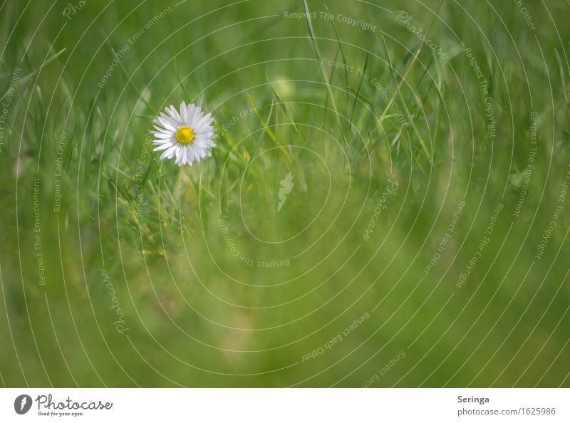 Nature Plant Flower Landscape Leaf Animal Environment Blossom Meadow Grass Garden Park Blossoming Lawn Daisy