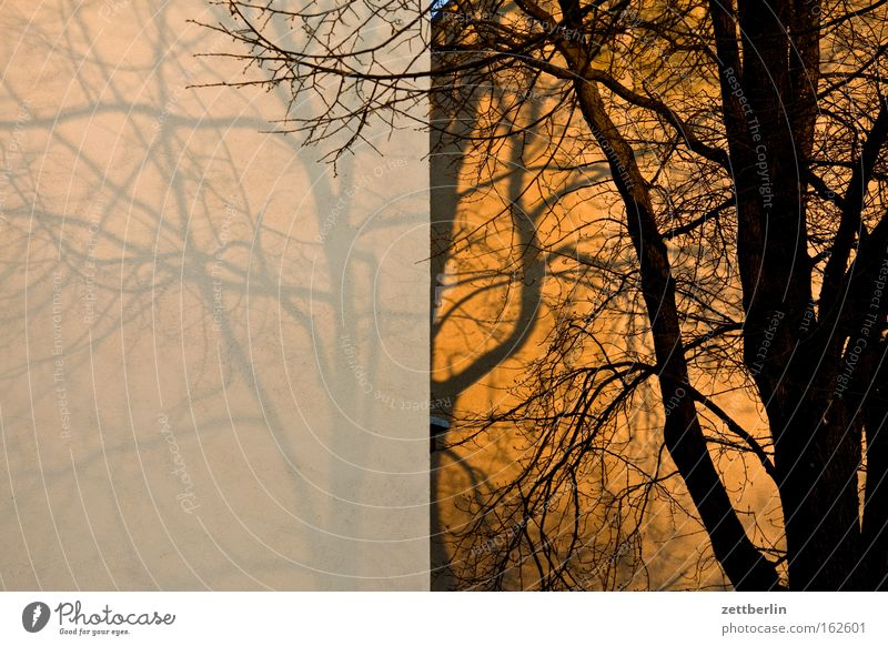 twilight Tree Tree trunk Branch Twig Autumn Wall (building) House (Residential Structure) Building Wall (barrier) Fire wall Sunset Shadow Seasons