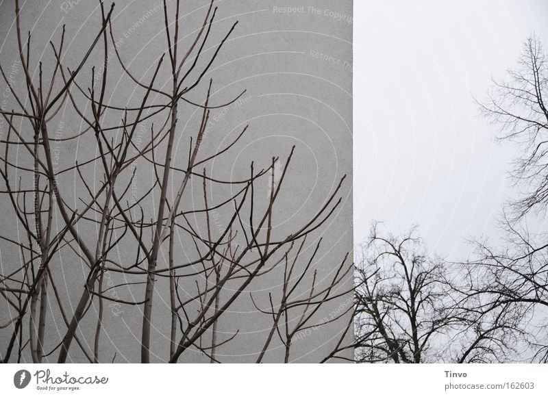 Tree Winter Wall (building) Gray Wall (barrier) Bushes Branch Twig Vessel Dreary Branched
