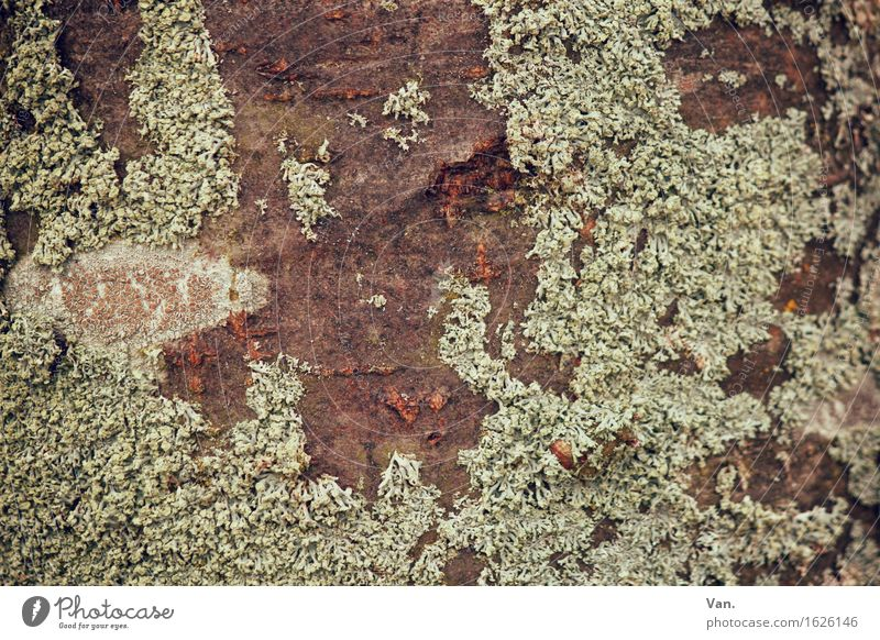 Where the moss slowly grows Nature Plant Autumn Tree Moss Tree bark Growth Dry Brown Green Lichen Colour photo Subdued colour Exterior shot Close-up Detail